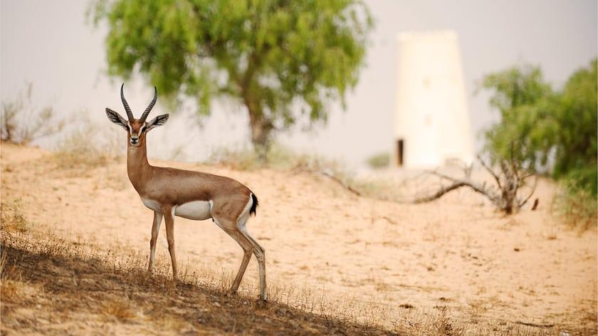 The Ritz Carlton Ras Al Khaimah, Al Wadi Desert, Stunning Wildlife